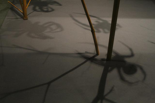 o.T. (Spinnen) 2015, Annette Grotkamp, Kunst, Fotografie, Photographie, Hamburg, HbK, Translator